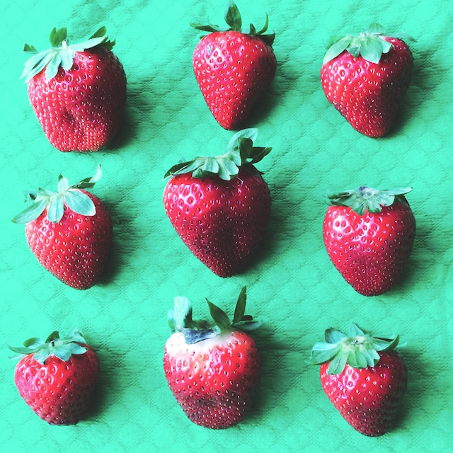 Strawberry Season 2016