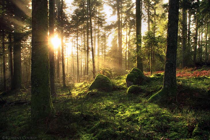 Landscape-mother-nature-23969148-730-487