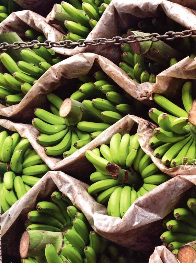 bananas227