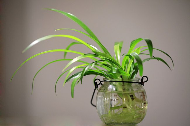 houseplant.jpg.650x0_q85_crop-smart