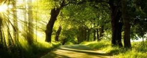 earthdaytrees